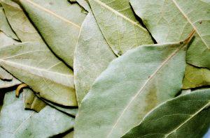 ローレル 月桂樹 ローリエ ベイリーフ